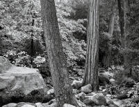Forest, Happy Isles, Yosemite Park, California 2008